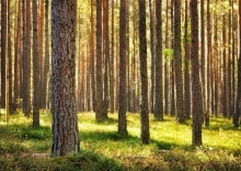 The Advantages of Cedar