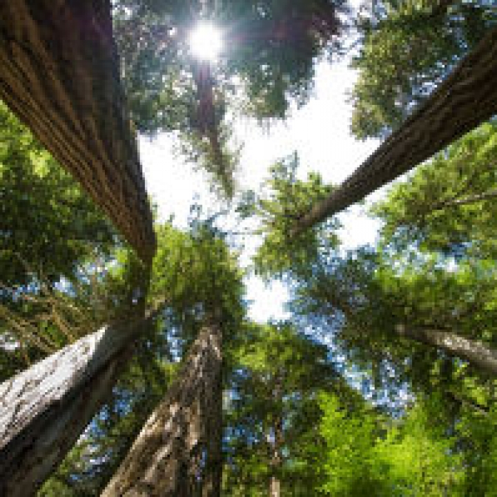Green Facts on Western Red Cedar